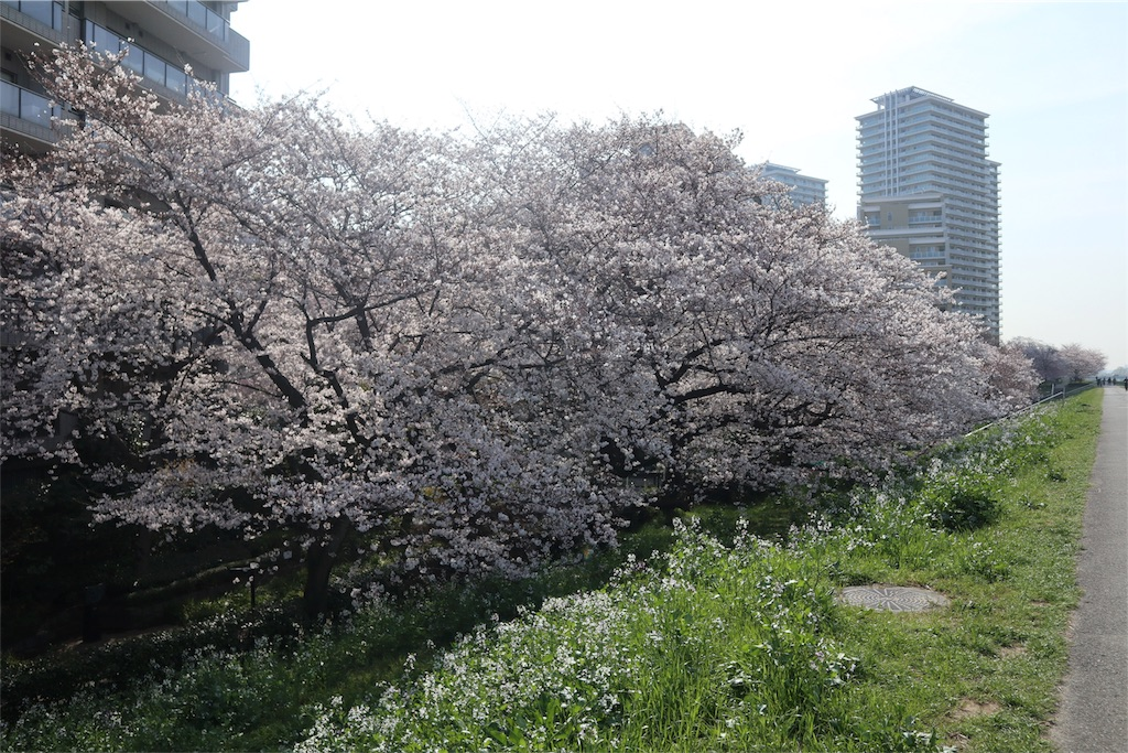 f:id:chizuchizuko:20180328230455j:image