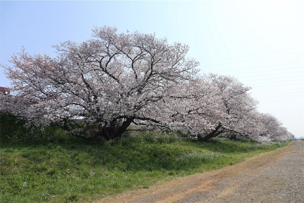 f:id:chizuchizuko:20180329114838j:image