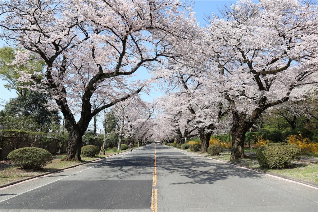 f:id:chizuchizuko:20180402103430j:image