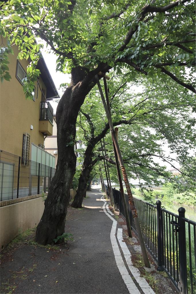 f:id:chizuchizuko:20180518210605j:image