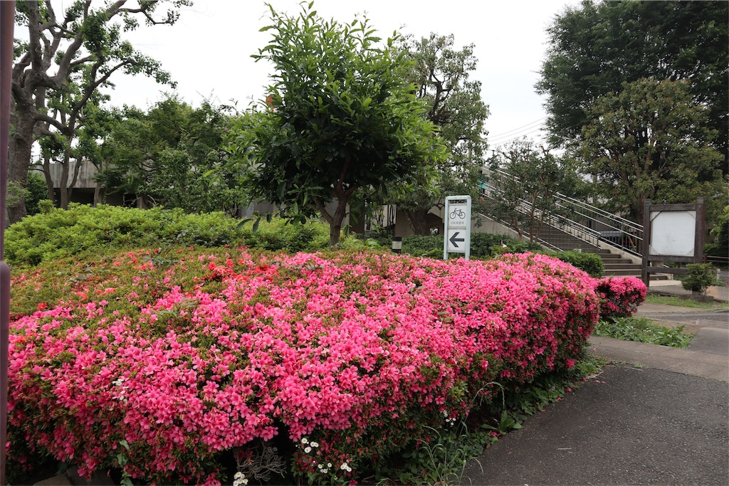 f:id:chizuchizuko:20180518213725j:image