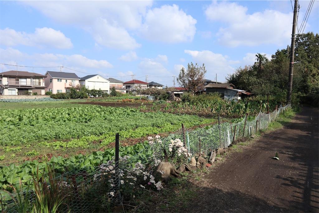 f:id:chizuchizuko:20181118113629j:image
