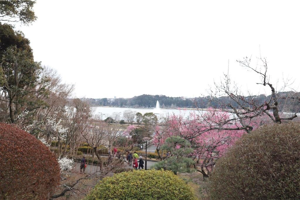 f:id:chizuchizuko:20190223221940j:image