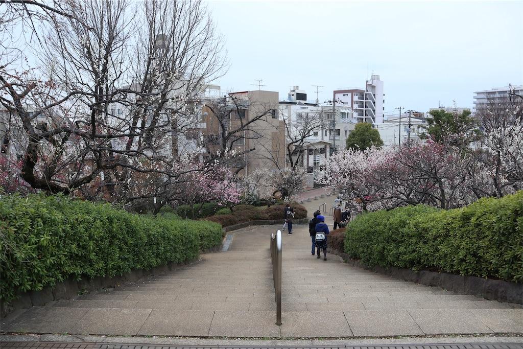 f:id:chizuchizuko:20190312004328j:image
