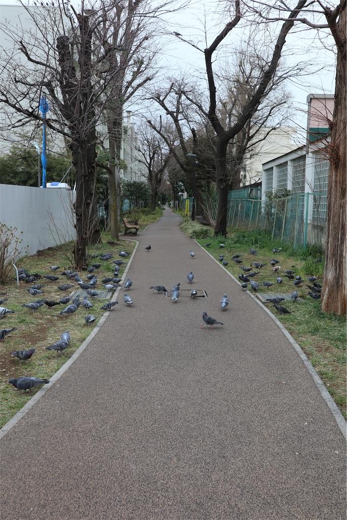 f:id:chizuchizuko:20190312004629j:image