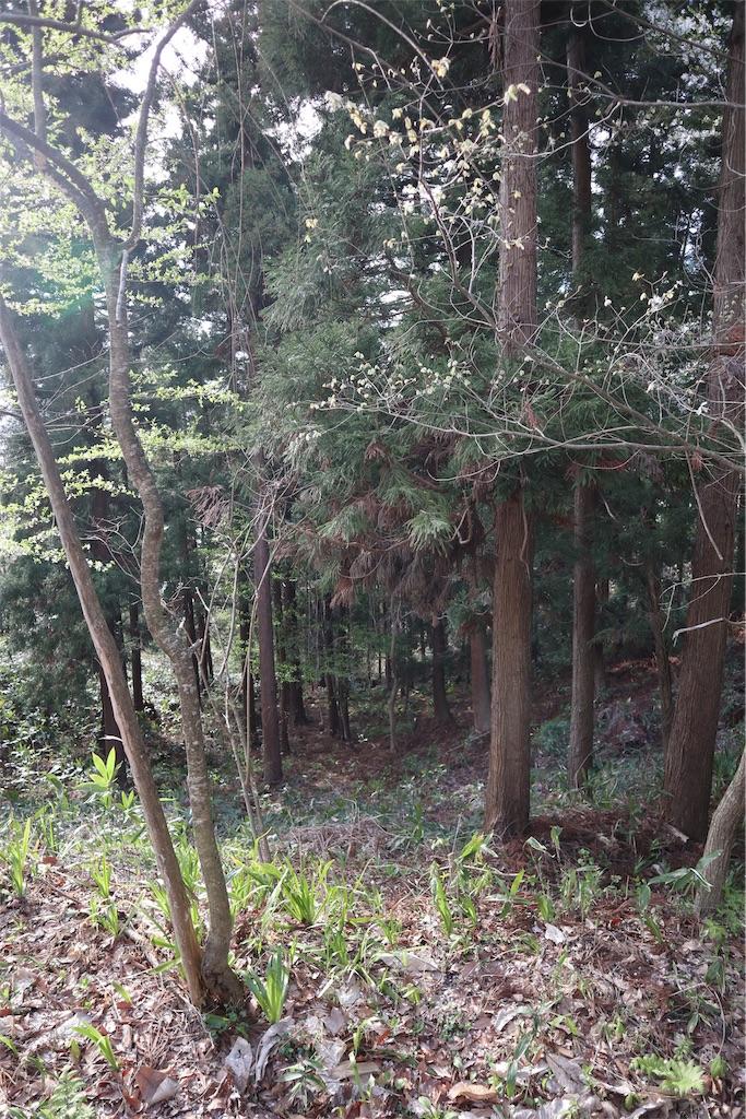 f:id:chizuchizuko:20190429104727j:image