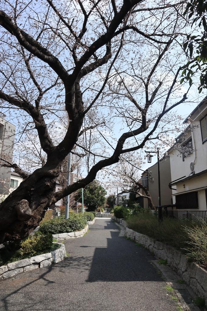 f:id:chizuchizuko:20210319190612j:image