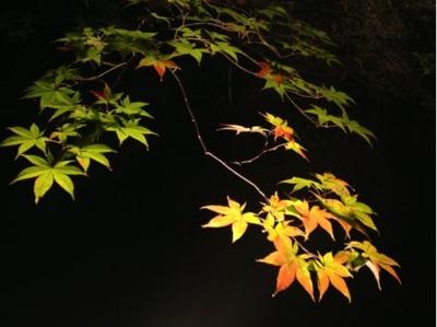 f:id:chizukichizuki:20131121204159j:image