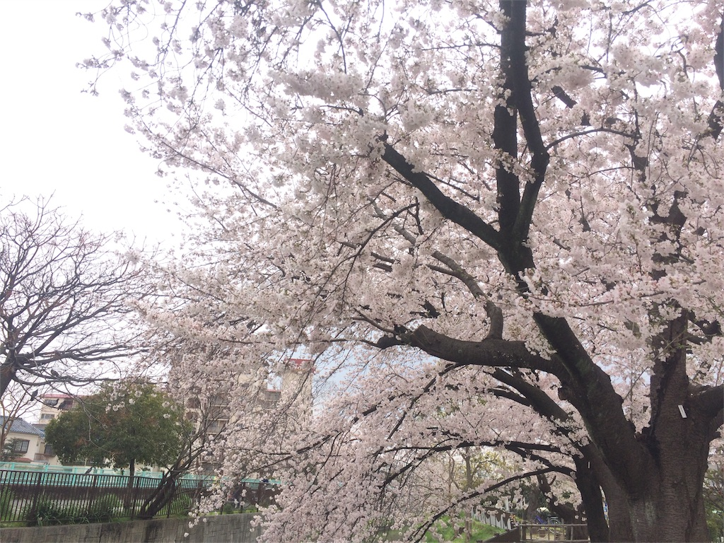 f:id:chizukichizuki:20170410003935j:image