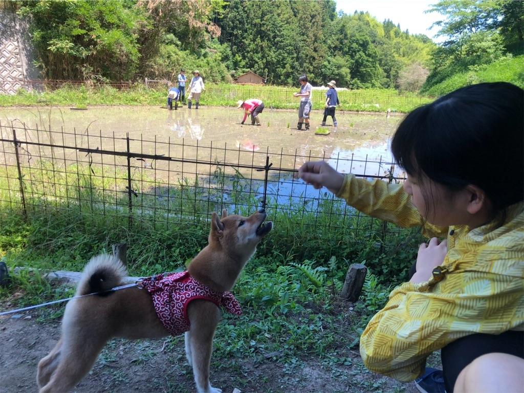 f:id:chizukichizuki:20200607231708j:image