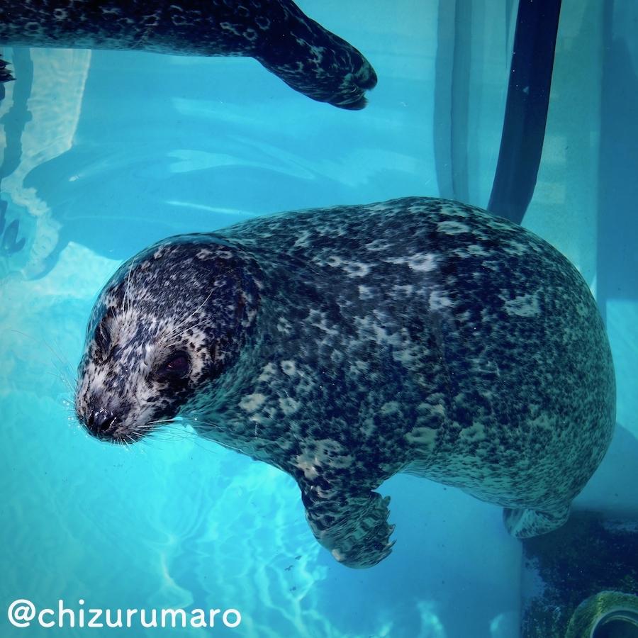 f:id:chizurumaro:20170412210424j:plain