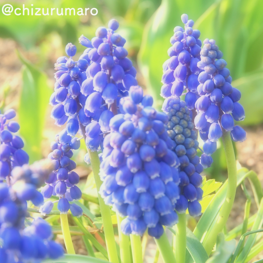 f:id:chizurumaro:20170421131019j:plain