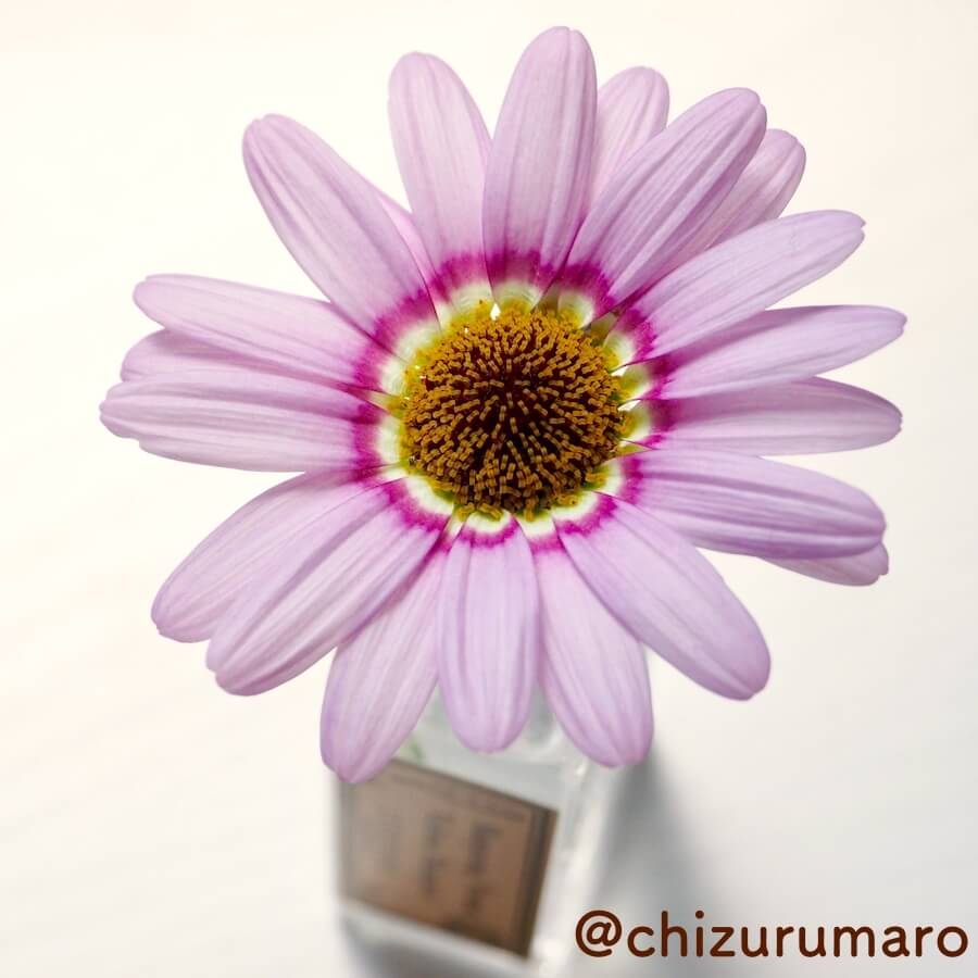 f:id:chizurumaro:20170613112605j:plain
