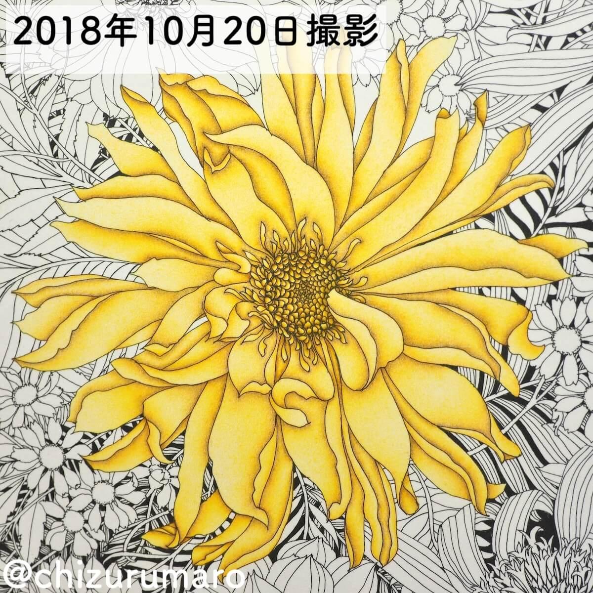 f:id:chizurumaro:20190626102001j:plain