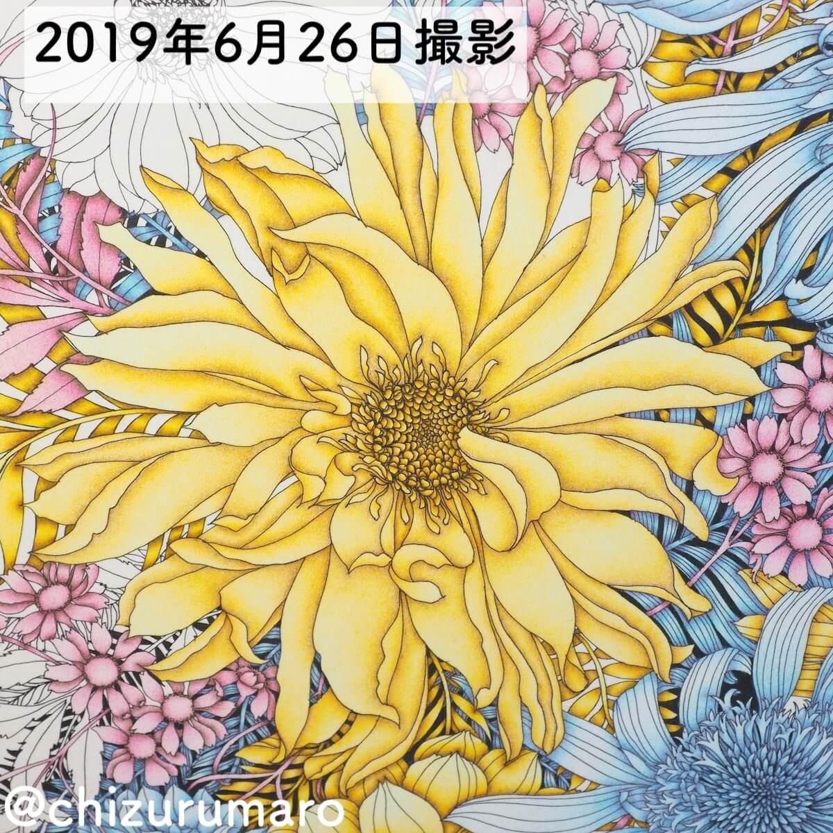 f:id:chizurumaro:20190626102019j:plain