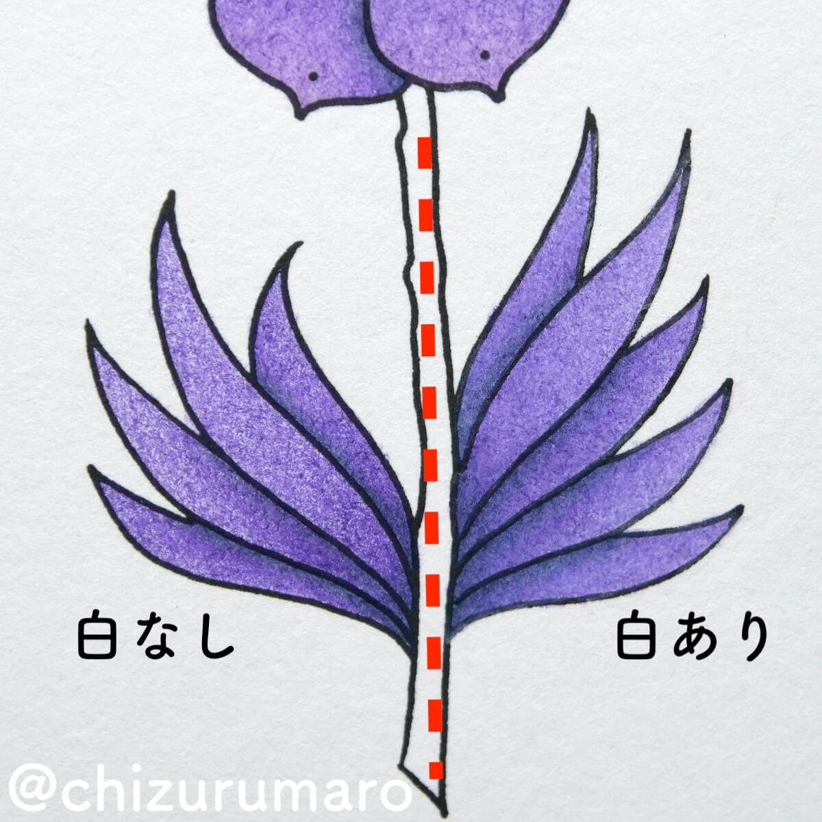 f:id:chizurumaro:20210805155325j:plain