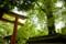 [京都][下鴨神社][糺の森]