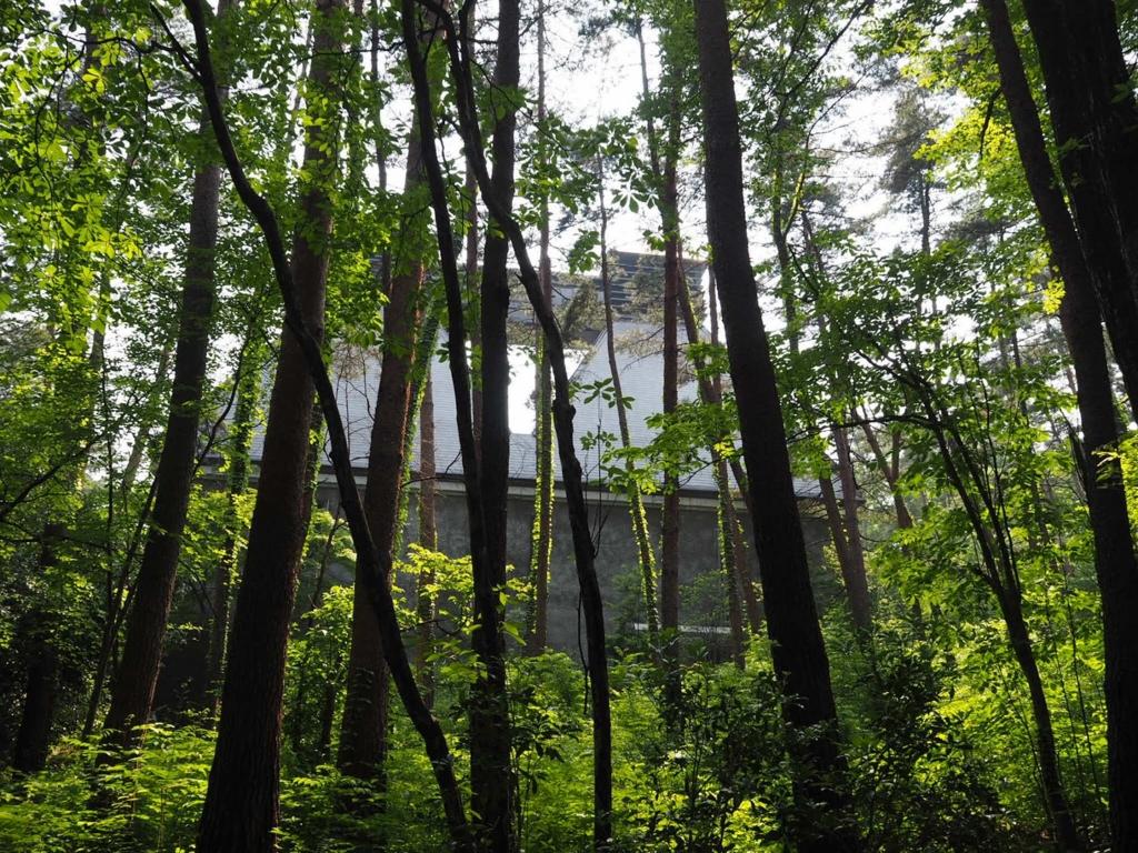 白州蒸留所敷地内の森林