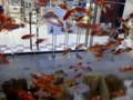 三越の入り口の金魚