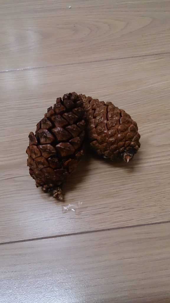 f:id:chocoflowerheart:20170604143018j:plain