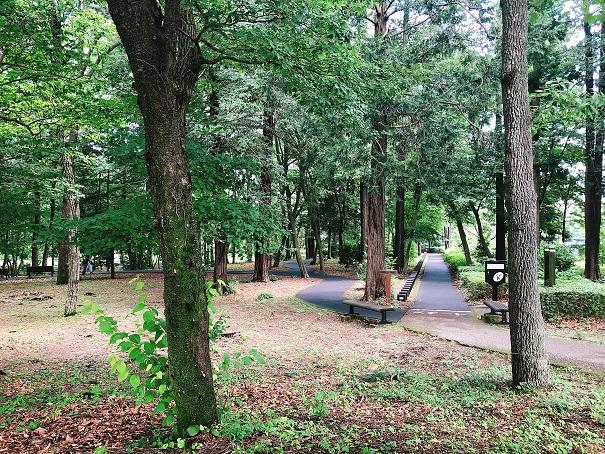 とちぎ健康の森のウォーキングコースの景色