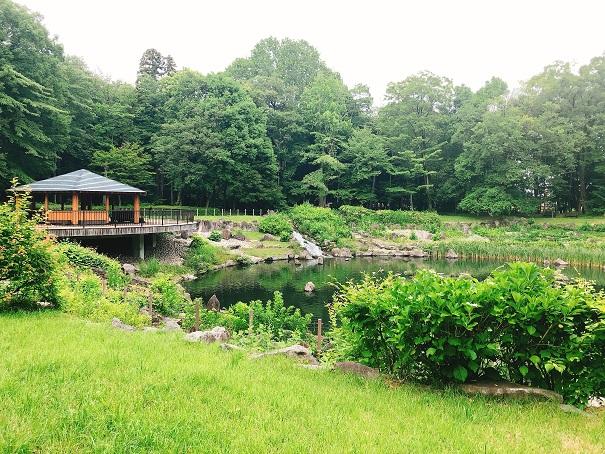 とちぎ健康の森の丸池