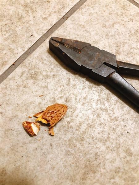 アーモンドの殻が割れて実がでてきたところ