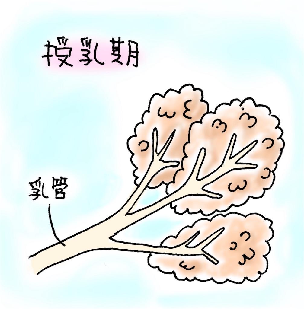 f:id:chocolate_ayaka:20180616230157j:image