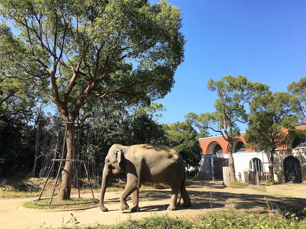 よこはま動物園ズーラシアのインドゾウ