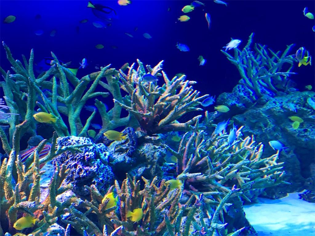 新江ノ島水族館のサンゴ礁水槽