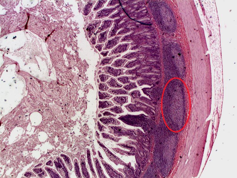 f:id:chocomale:20180115110904j:image