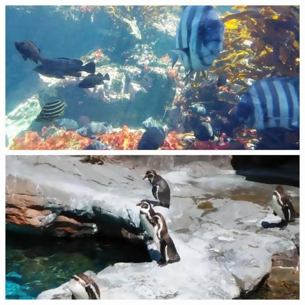 大洗水族館アクアワールド ペンギン