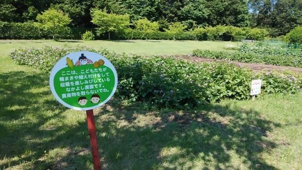 壬生町 わんぱく公園 畑