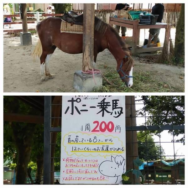 宇都宮動物園ポニー乗馬