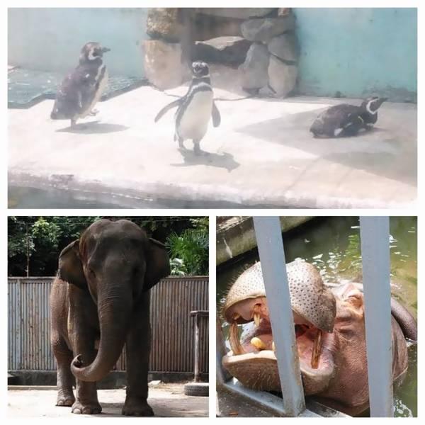 宇都宮動物園 動物
