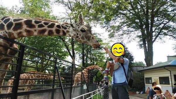 宇都宮動物園 キリン餌やり