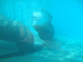 [マリンピア日本海][水族館]