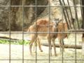 [多摩動物公園][動物園]