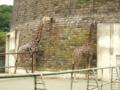 [円山動物園][動物園]