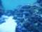 [うみたまご][水族館]