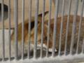 [京都市動物園][動物園]