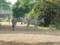 [八木山動物公園][動物園]