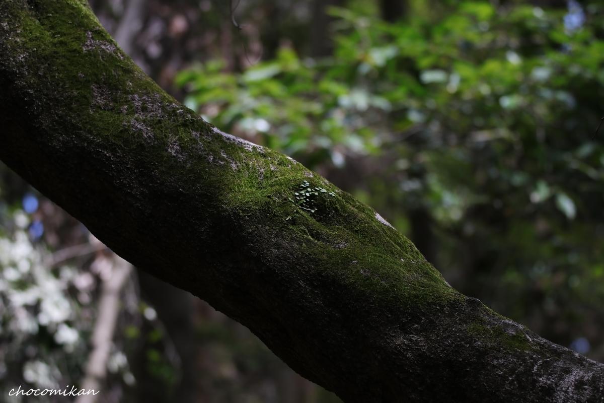 f:id:chocotarou:20190506231652j:plain