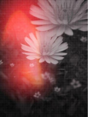 f:id:choiyaki:20110523055331j:image