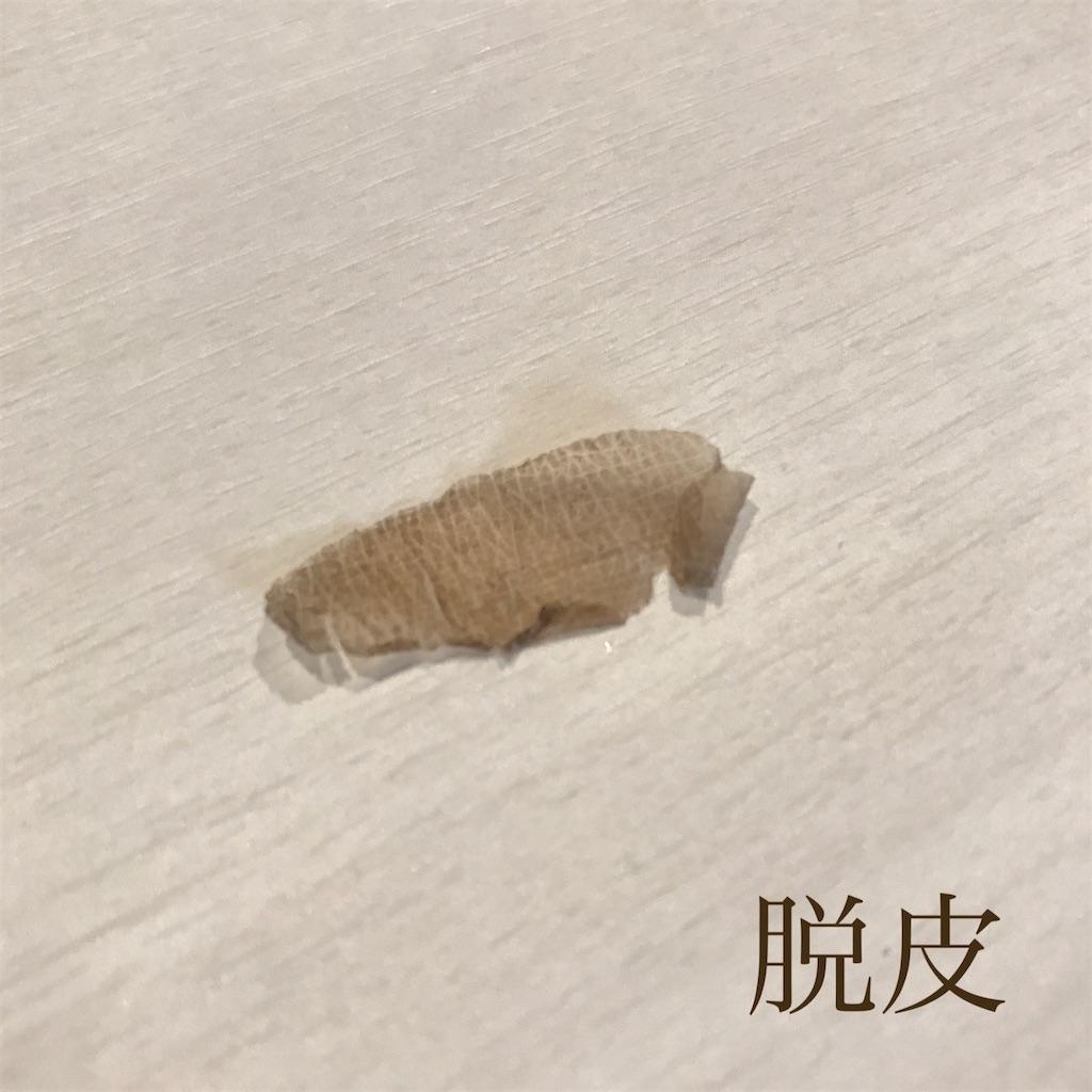 f:id:chokichokihair:20200811142629j:image