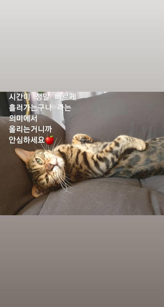 f:id:chokoreeto:20190805135749j:plain