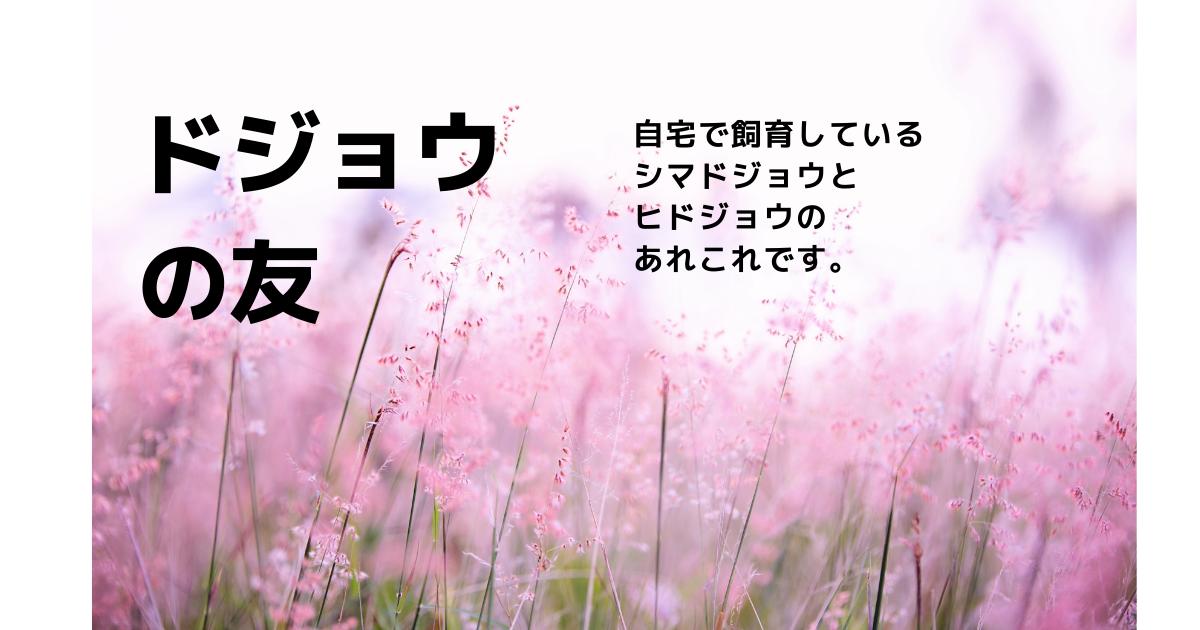 f:id:chokukotan:20210527113457p:plain