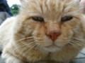オシンコシンの滝にいた老猫
