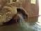 安楽温泉 鶴の湯