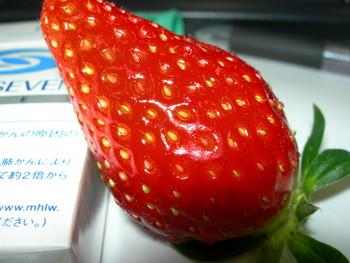 f:id:choshimarina:20051203160914j:image